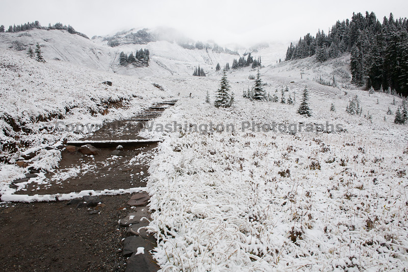 Mt Rainier Paradise Snow 151