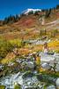 Mt Rainier Paradise 240