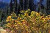 Mt Rainier Paradise Autumn 203