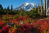 Mt Rainier Paradise Autumn 141