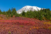 Mt Rainier Paradise Autumn 202