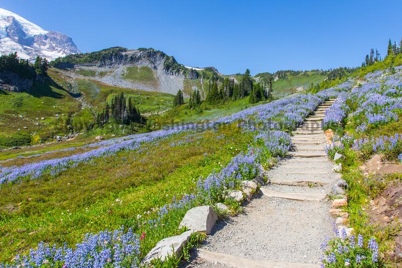 Mt Rainier Paradise 181