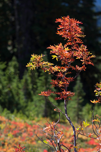Mt Rainier Paradise Autumn 162