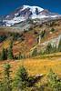 Mt Rainier Paradise 262