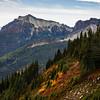 Fall colors along Mazama Ridge, looking toward the Tatoosh Range in Mt Rainier National Park