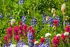 Mt Rainier Wildflowers 106