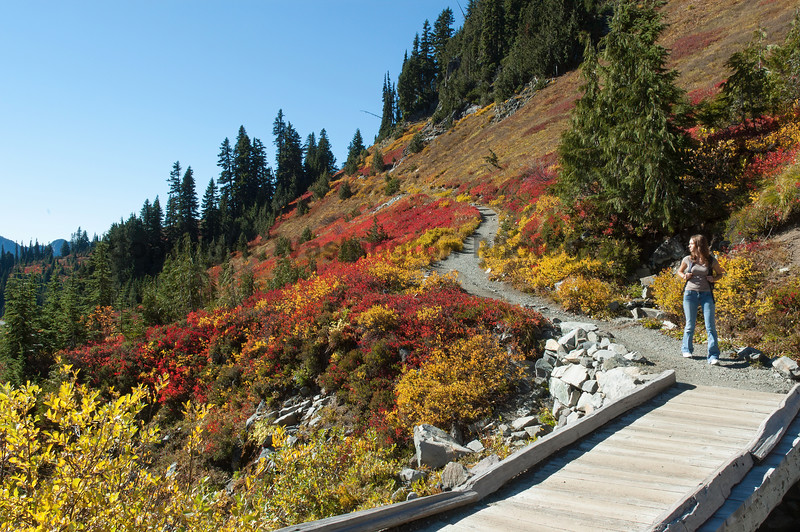 Mt Rainier Paradise 227