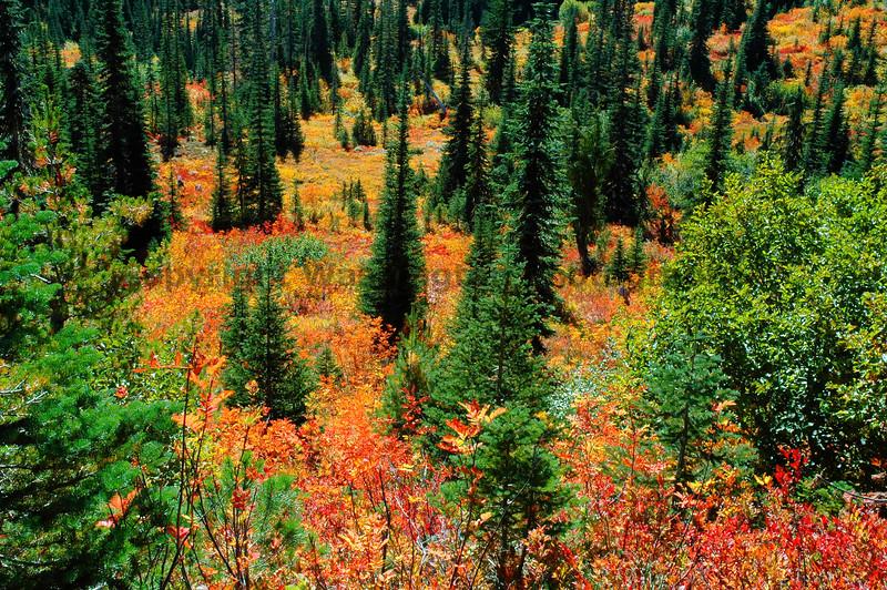 Mt Rainier Bench Lake Trail 14