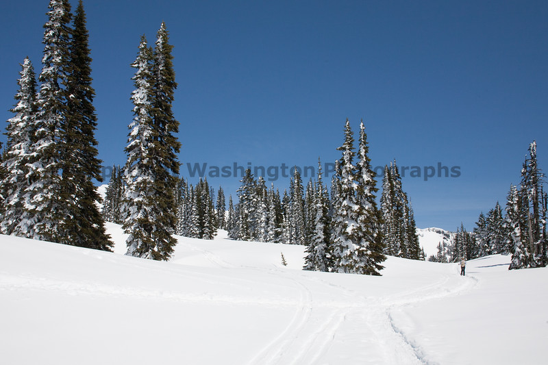 Mt Rainier Paradise Winter 106