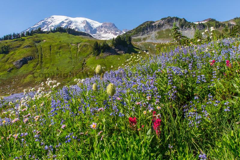 Mt Rainier Paradise 178