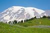 Mt Rainier Paradise 141