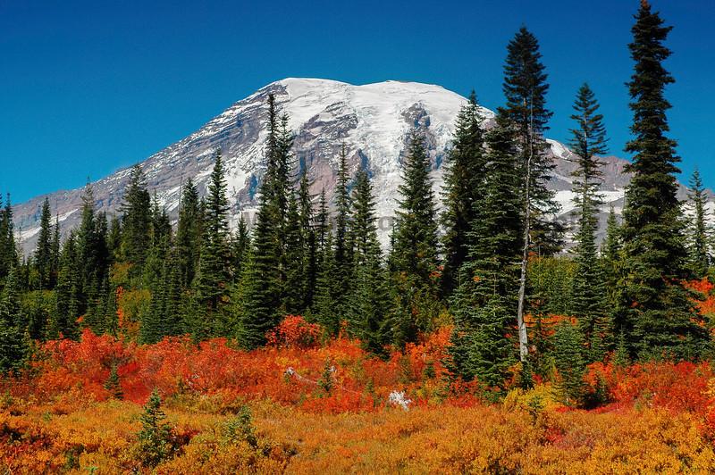 Mt Rainier Bench Lake Trail 28
