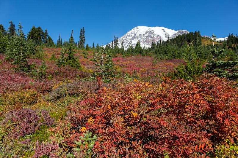 Mt Rainier Paradise Autumn 200