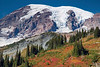 Mt Rainier Paradise 251