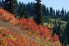 Mt Rainier Paradise Autumn 161