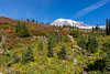 Mt Rainier Paradise Autumn 206
