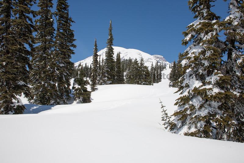 Mt Rainier Paradise Winter 107