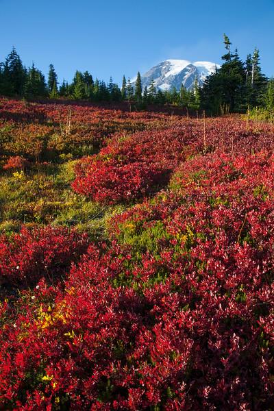 Mt Rainier Paradise Autumn 133