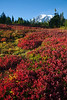 Mt Rainier Paradise Autumn 133