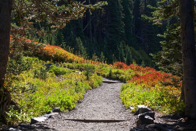 Mt Rainier Paradise Autumn 167