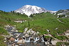 Mt Rainier Paradise 108