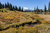 Mt Rainier Tipsoo Lake 24