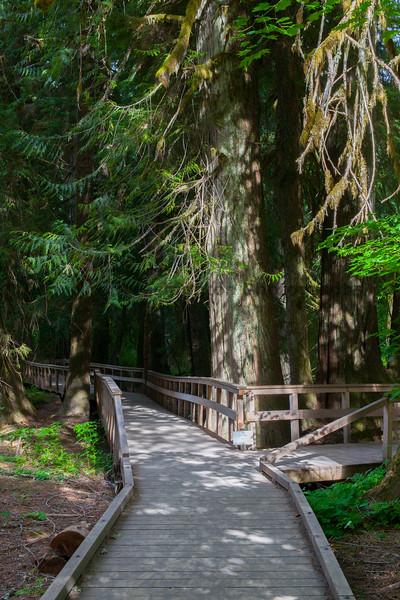 Mt Rainier Grove of the Patriarchs 27