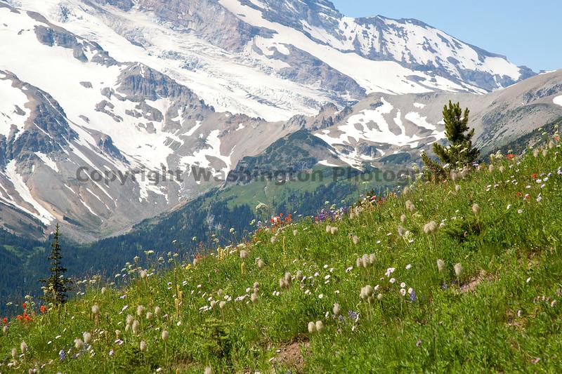Mt Rainier Sunrise 126