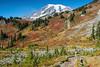 Mt Rainier Paradise 243
