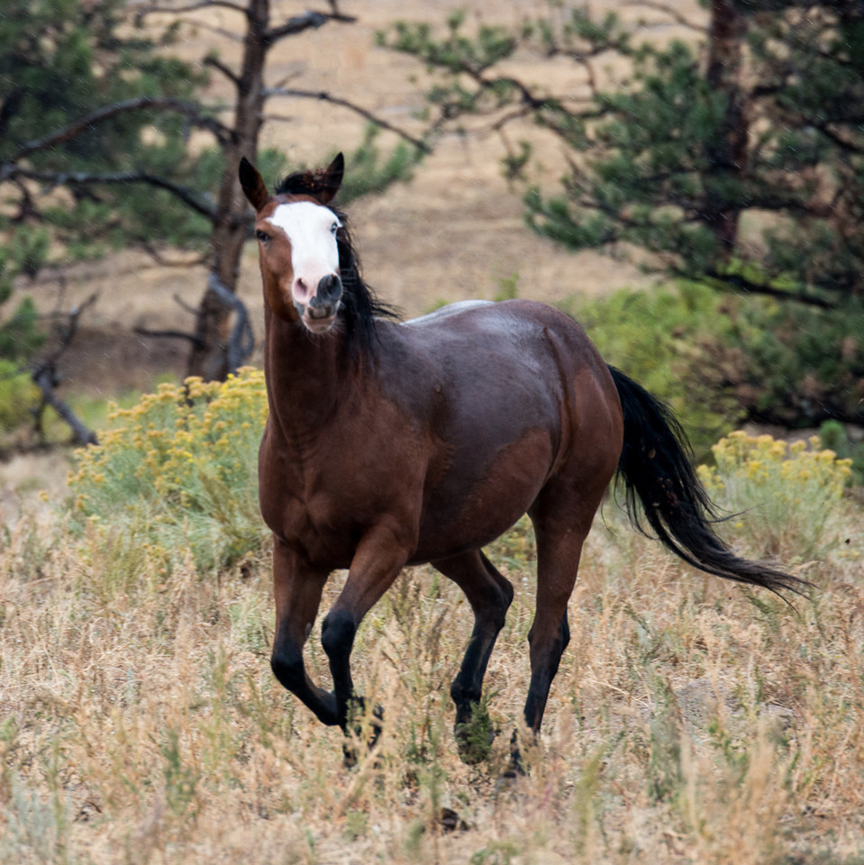 Wild Horse Sanctuary-Hot Springs, SD