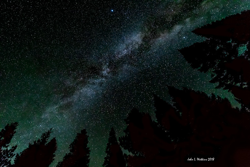 The Trees All Point to the Milky Way