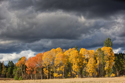 October 26 (Aspens & Big Barn) 001-Edit