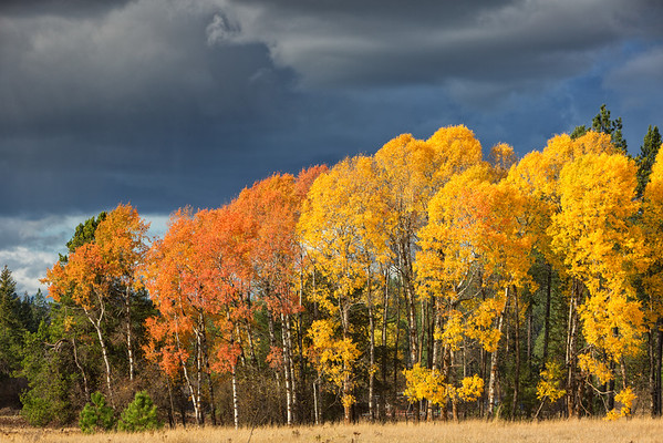 Autumn Colors on Mt. Spokane