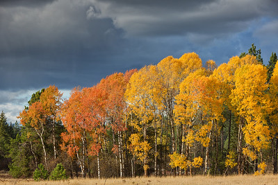 October 26 (Aspens & Big Barn) 067-Edit-2