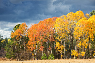 October 26 (Aspens & Big Barn) 052-Edit
