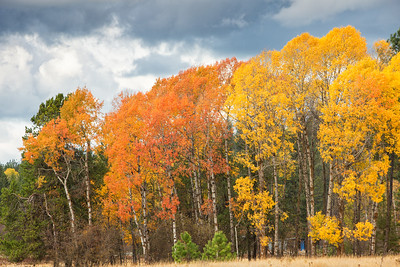 October 26 (Aspens & Big Barn) 010-Edit
