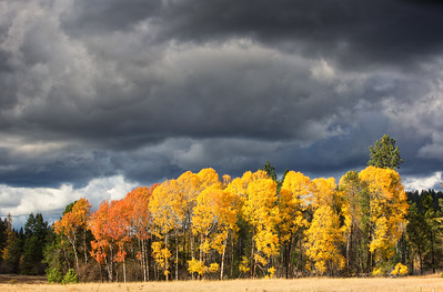 October 26 (Aspens & Big Barn) 003-Edit
