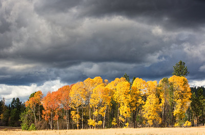 October 26 (Aspens & Big Barn) 005-Edit