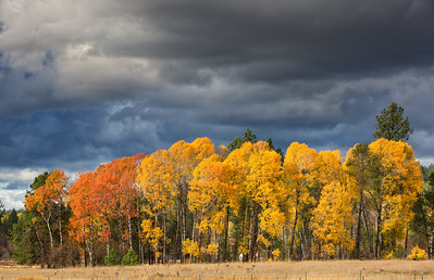 October 26 (Aspens & Big Barn) 051-Edit