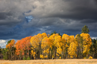 October 26 (Aspens & Big Barn) 058-Edit