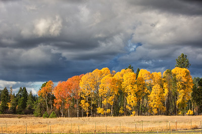 October 26 (Aspens & Big Barn) 065-Edit