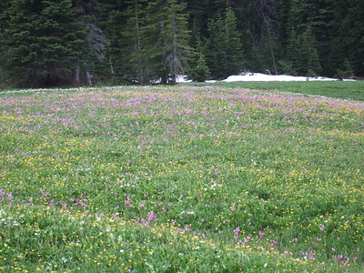 We begin our last hike up Lookout Mtn. from High Prarie, an isolated spot filled with wildflowers.