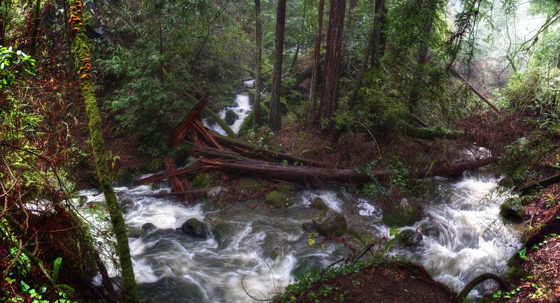 Redwood Creek, just above Muir Woods.