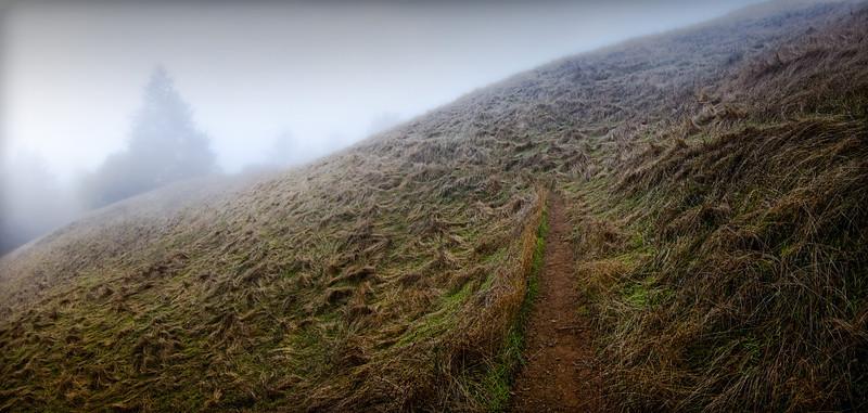 Beginning of the High Marsh Trail.