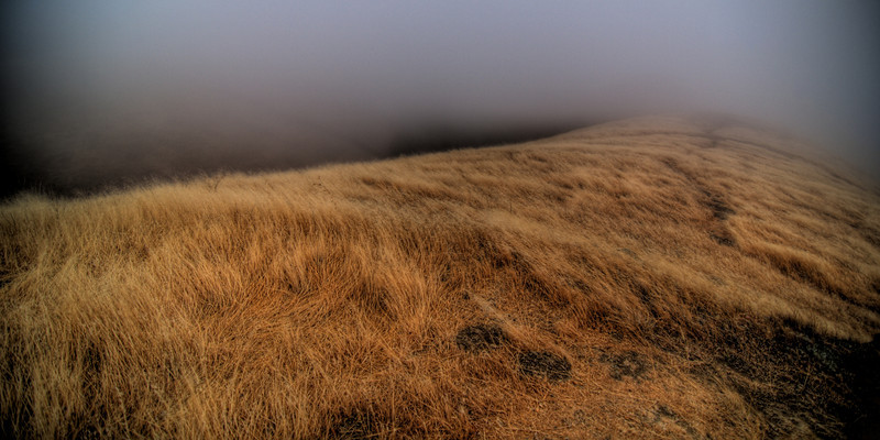 Bolinas Ridge in fog - July 21, 2008