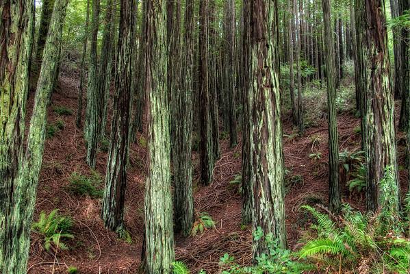 Miscellaneous Trails