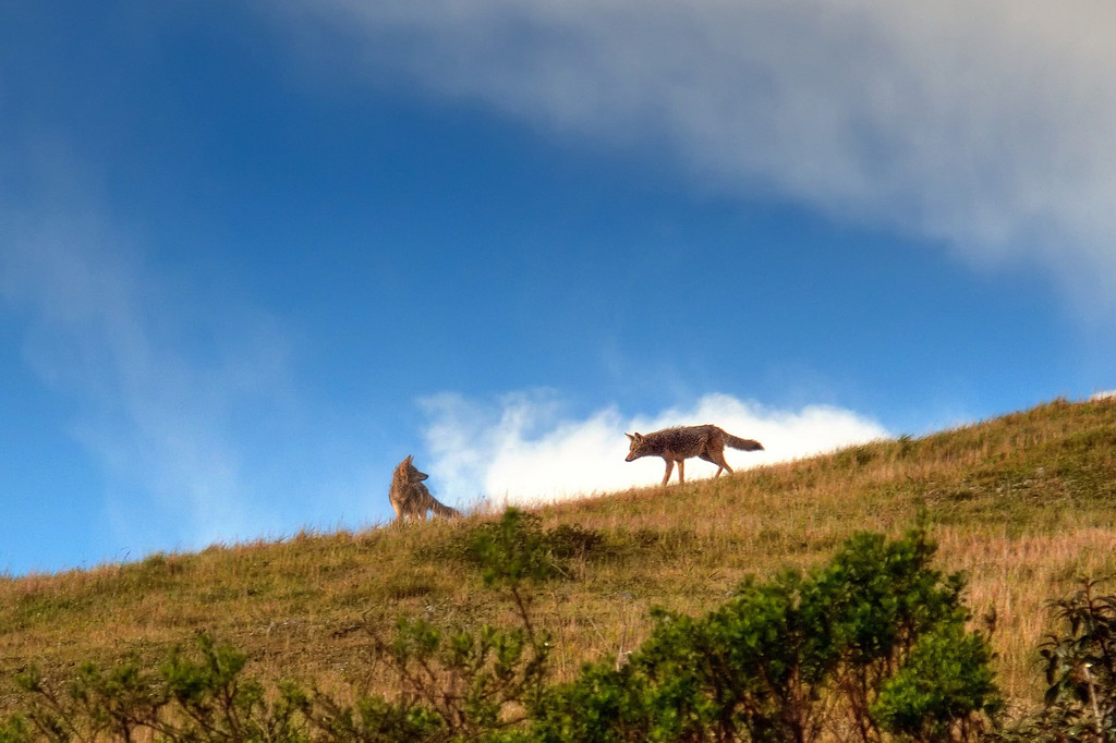 Storm Passing through Tennessee Valley, Marin Headlands.  Composite of previous two images.