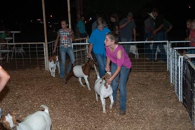 20180803_mtview_goats-21