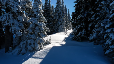 I'm tempted to take a foray up through the virgin snow and see where this path leads.