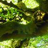 Cool moss.
